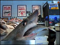 We're gonna need a bigger boat (Yolande...) Tags: food fish holland animal shark haai explore fishshop ijmuiden instantfave mywinners supershots eeeeks anawesomeshot viswinkel