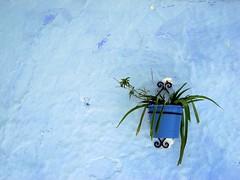 Emotions in Blue (danieleb80) Tags: africa blue colour blu morocco chefchaouen blueribbonwinner aplusphoto ysplix somethingblueinmylife wonderfulworldmix colourofafrica colourofmorocco