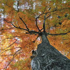 shades of autumn (ajpscs) Tags: autumn tree colors japan vivid  nippon  takao mttakao dyes newtoy testshot tints d300 untreated shadesofautumn ajpscs nikonstunninggallery nikond300 activedlighting simplycamerasetting