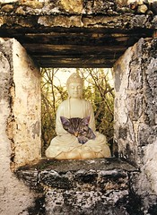 Buddha of the Sleeping Cat (nkimadams) Tags: collage cat buddha artisticexpression globalspirit