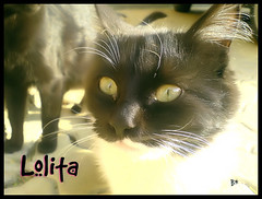 Lolita (aunqtunolosepas) Tags: portrait pet cats baby pets white black cute blanco look animal animals closeup cat eyes kitten close bea k750i sweet retrato negro adorable kitty kittens gatos cutie lolita tuxedo ojos gato kitties gata felinos felino animales cerca cachorros cuteness gatitos mirada mascota gatas callejero callejera cercano cachorrita cercana kissablekat aunqtunolosepas