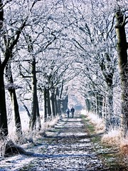 Winter (Vineyards) Tags: winter people white cold holland nature dutch forest utrecht frost walk nederland thenetherlands natuur wonderland bos lopen groeneveld wandeling mensen koud baarn landgoed