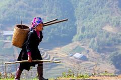 The Daily Hike (hcjonesphotography) Tags: mountains terraces vietnam ricepaddies sapa hmong ethnicminority