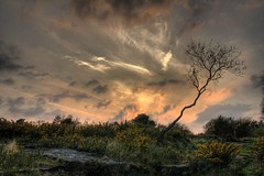 Lone tree (*Richard Cooper *) Tags: sunset hdr wirral 3xp bidstonhill hdrpro