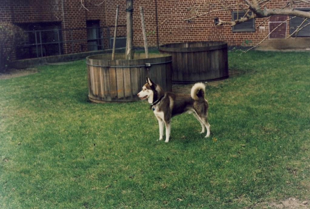 Roscoe in 54th street yard