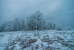 (Djordje Petrovic) Tags: goc snow winter nature mountain serbia srbija frozen tokina1224mm tokina tree fog forest color photo light