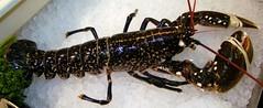 Fresh Raw Lobster