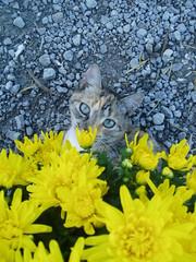 Cats like flowers too.