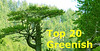 Top 20 Greenish
