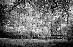 Longcross Gate Evening  - IR (Skink74) Tags: uk england blackandwhite bw film 35mm mono hampshire infrared a1 ilford newforest r72 longcross sfx200 fd28mmf28 canonfd28f28 filmdev:recipe=5079