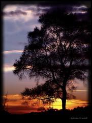 Colour me softly (Kirsten M Lentoft) Tags: sunset fab tree silhouette bravo soft themoulinrouge mywinners worldbest impressedbeauty momse2600 diamondclassphotographer seasunclouds brillianteyejewel theperfectphotographer somethingveryspecial kirstenmlentoft