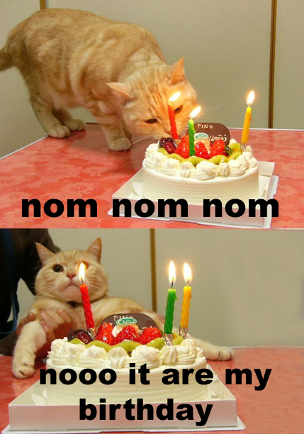cat_birthday