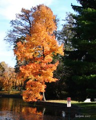 Column of Gold (Jane Volk) Tags: autumn fall monument grave leaves dead lexington ky cemetary statues tombs firsthand aplusphoto thisisky