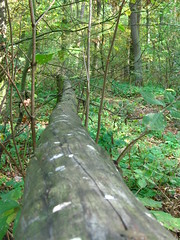 follow the line in the forest (hagne) Tags: wood trees tree green grass forest poland lichen braun colourartaward artlegacy