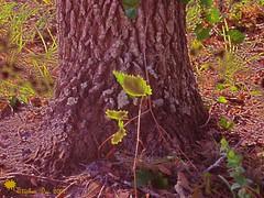 """Thinking about Things"" (stephgum32807) Tags: nature orlando nikon december heart florida free awards backlighting nauture anawesomeshot"