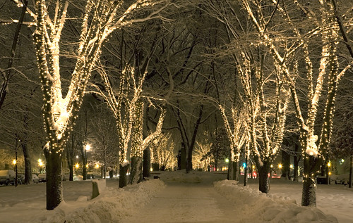 Christmas on Commonwealth Avenue