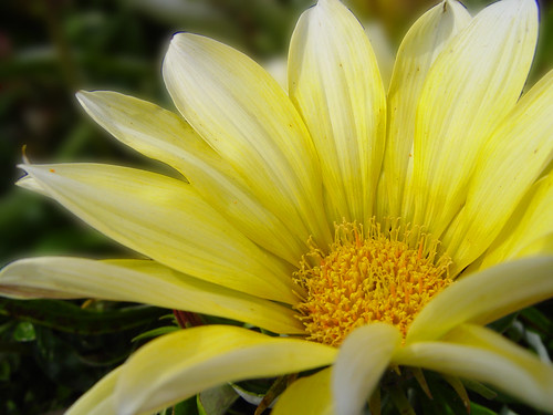 yellow sunrays