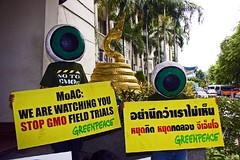 กรีนพีซจี้รัฐ เลิกคิดล้มมติ ครม. พืชจีเอ็มโอ