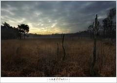 Cloudy twilightsky (1D001353) (nandOOnline) Tags: trees sunset sky nature clouds de landscape nationalpark twilight skies exposition gras peel turf expositie moorland asten stilte nandoonline mijlopzeven nandoharmsen