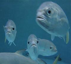 goede vis