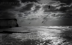 1920x1200px  Stormy English Weather Seaford Beach Desktop Photo (imjustcreative) Tags: wallpaper seagulls beach landscape photography coast desktoppicture seaford desktoppictures desktopphoto roughsea stormyseas desktopphotos seafordhead