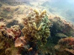 IMG_4155 cuttlefish