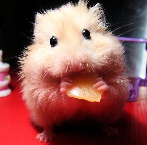 Bułeczka the Cheese Eater