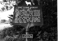 Tubby's Forest (VEB Zardoz the Gravyboat) Tags: summer vacation bw usa holiday film apple wisconsin america 35mm mono mac nikon memorial bn software iphoto analogue nikkor schwarzweiss  olson nikonf4  doglover blancenegre