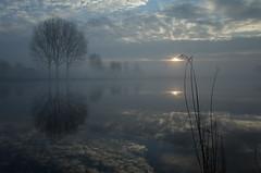 Riverside (BartvanDam) Tags: winter reflections trees clouds sun river lake dutch thenetherlands mirror