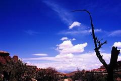Burning valley () Tags: blue sky panorama usa cloud tree film silhouette landscape geotagged dead utah nationalpark big intense nikon fuji view wide ishootfilm velvia burnt valley massive canyonlands vista fujifilm 100 velvia100 f80 needles 100iso needlesdistrict geo:lat=38142043 geo:lon=109826778
