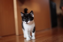 """Mojo"" - made explore, the cuteness prevails! (felt_tip_felon) Tags: pet animal cat kitten feline whiskers meow mojo pussycat"