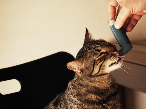 Gatto Mimmo aspirante asmatico (enlace externo)