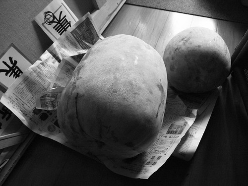 Wax gourd