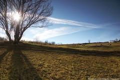 Suvodalje (darkves) Tags: sun tree grass hill sheeps autmn lendscape suvodalje medvednikcountry darkoveselinovic
