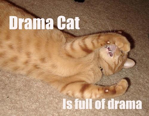 Drama Cat is Full of Drama