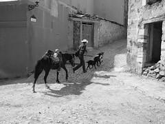 Prisa (estavares) Tags: caballo sombrero calles corriendo chivas realde14 hombreconprisa
