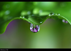 ~Wavey Drops~ (Adettara Photography) Tags: fab color macro leaf orchids soe mikegreen cubism takeabow themoulinrouge naturesfinest blueribbonwinner splendiferous supershot passionphotography golddragon abigfave perfectangle worldbest platinumphoto anawesomeshot fineartwork impressedbeauty ultimateshot flickrplatinum irresistiblebeauty superbmasterpiece beyondexcellence diamondclassphotographer flickrdiamond ysplix excellentphotographerawards theunforgettablepictures brillianteyejewel overtheexcellence macromarvels betterthangood theperfectphotographer thegardenofzen thegoldendreams goldstaraward excapturemacro adettara life~asiseeit ahqmacro multimegashot waveydrops gdmike