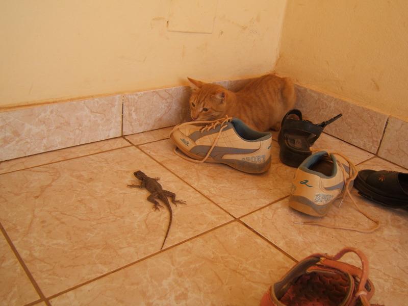 Qui a peur des lézards?