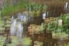 DSC_3293 Wrights Water Garden (lucius_s) Tags: movement pond waterlillies impressionistic lillypond wrightwatergarden