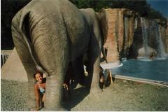elefante (alex291081) Tags: 2003 amici etnaland