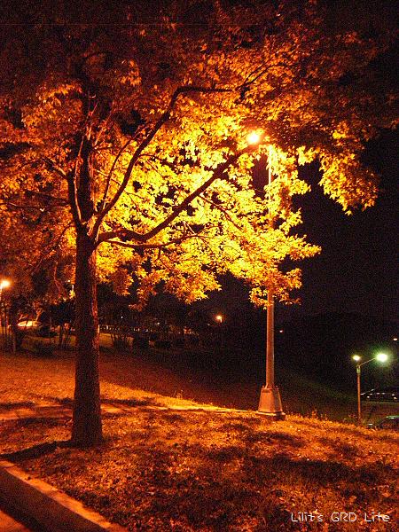 20080306_路燈映樹