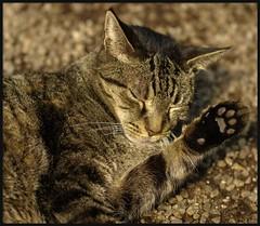 50mm macro (jeff-e) Tags: cat gravel