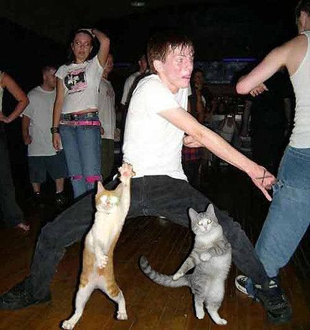dance cats