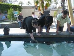 Tim touches a shark for the 2nd time in his life. (04/24/2008)