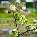 New blossom