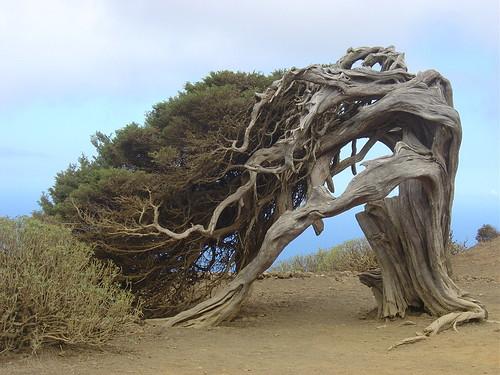 Des arbres bien étranges dans PHOTO 2497541208_9224f659f8