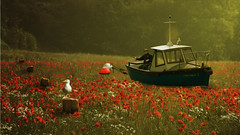 The Red Sea (Matt West) Tags: ocean flowers red sea field scarlet boat fishing seagull line poppies rod angler seaofflowers hooklinesinker crappoetry