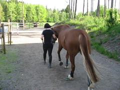 IMG_4935 (Maxiv) Tags: hevonen taavi