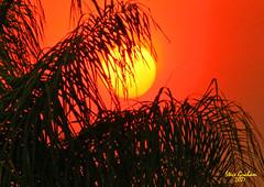 sunset palm (artfilmusic) Tags: sunset palms