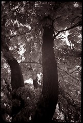 Windy (bildministeriet) Tags: storm motion tree leaves 35mm experiments wind blurred plastic scanned cheap compact selenium fujisuperia200 olympusaf10super 1atthefleamarket